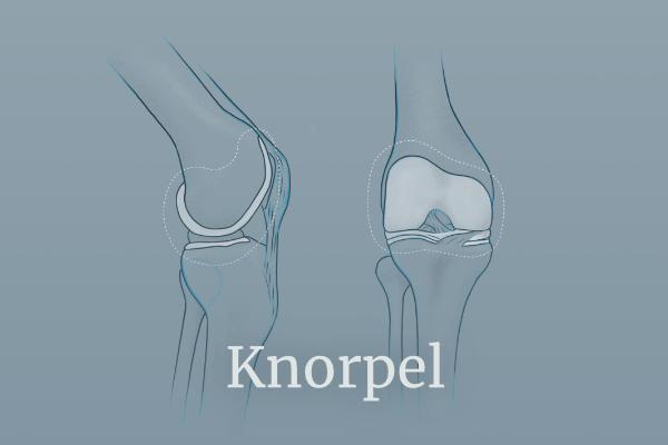 Illustration des Knorpels - Link führt zu Knorpeloperationen
